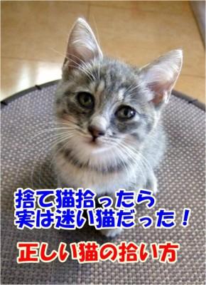 捨て猫トラブル急増中