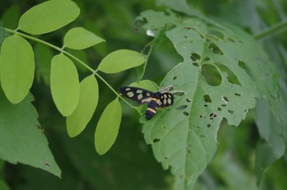 葉に付く害虫