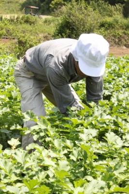 収穫する人