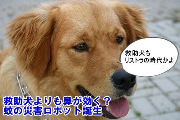 リストラをぼやく救助犬