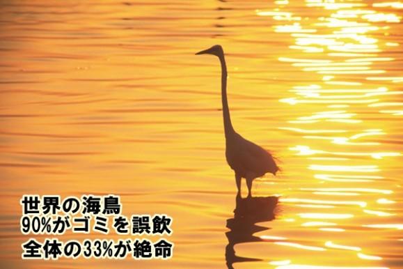 夕日にたたずむ海鳥