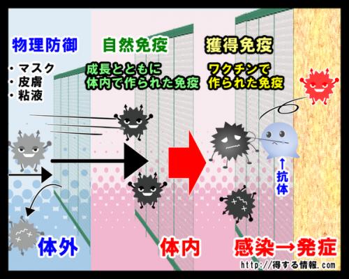 インフルエンザウイルスを免疫が防ぐ仕組み