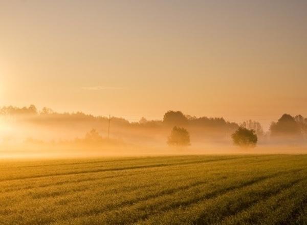 濃霧になっている畑