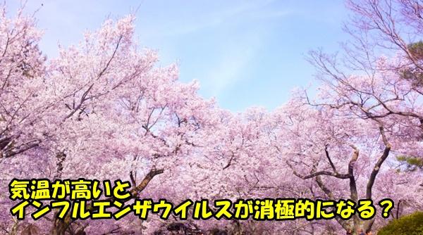 春で満開の桜