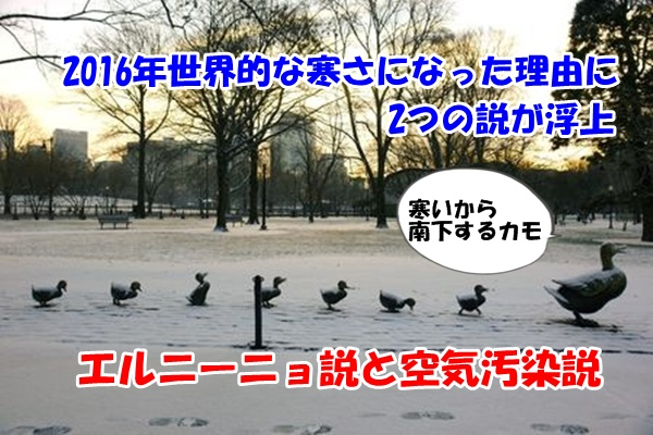 雪で南下する鴨