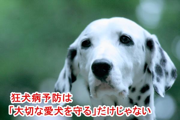 狂犬病予防接種は愛犬を守るだけじゃない