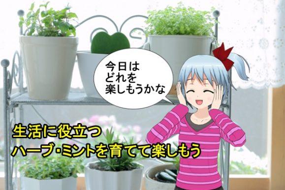 ハーブの鉢植え