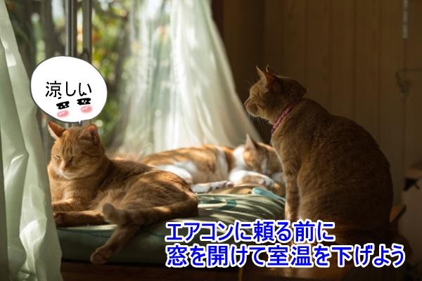 窓を開けて涼む猫
